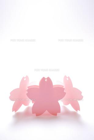 桜の花のカードの写真素材 [FYI00147401]