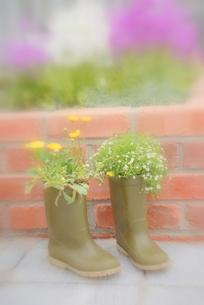 長靴のガーデニングの写真素材 [FYI00147411]