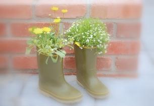 長靴に花を植える.の写真素材 [FYI00147415]