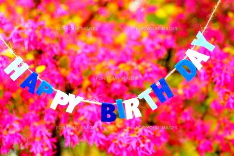 ピンクの花に飾られた誕生日メッセージ.の写真素材 [FYI00147416]