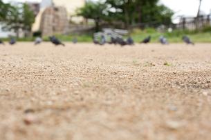 鳩のいる公園の写真素材 [FYI00147428]