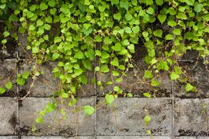 壁際の草の写真素材 [FYI00147459]