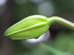 芽の写真素材 [FYI00147474]