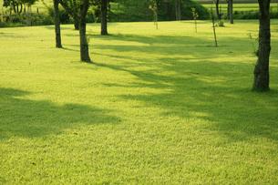 公園の芝生 木陰の素材 [FYI00147533]