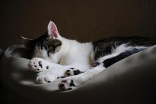 猫の素材 [FYI00147560]