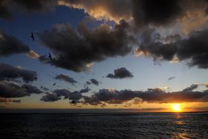 夕焼け空と鴎の写真素材 [FYI00147585]