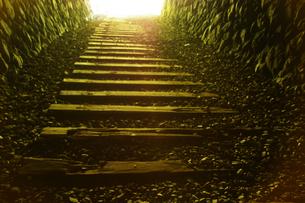 トンネルの写真素材 [FYI00147587]
