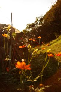 光と花の写真素材 [FYI00147593]