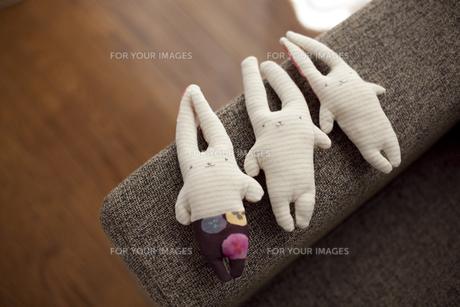 ウサギ3兄弟の写真素材 [FYI00147864]