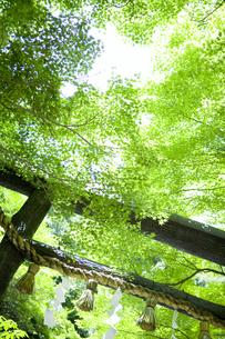 京都の神社の写真素材 [FYI00147874]