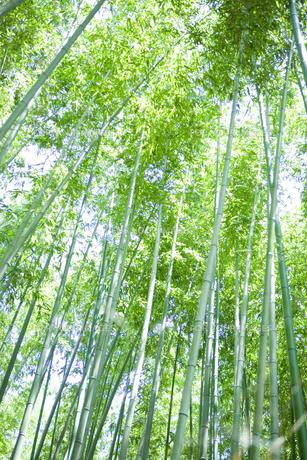 京都嵐山の竹やぶの写真素材 [FYI00147875]