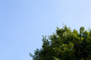 公園の木の写真素材 [FYI00147888]