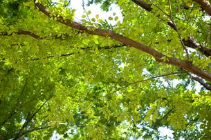 葉っぱと枝の写真素材 [FYI00147895]
