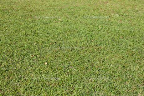 芝生の素材 [FYI00147907]