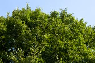 公園の木の写真素材 [FYI00147915]