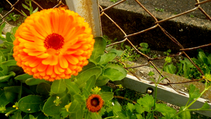 道端の花の写真素材 [FYI00148180]