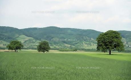 ドイツの草原の素材 [FYI00148194]