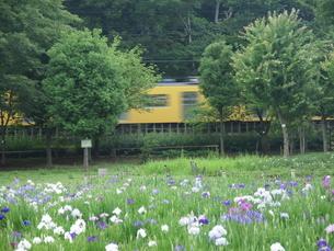 菖蒲と電車の写真素材 [FYI00148241]