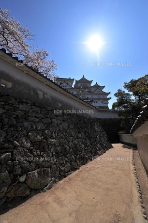 姫路城桜と回廊の写真素材 [FYI00148596]