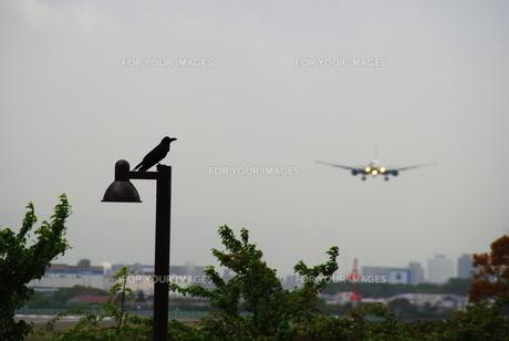 カラスの住む空港の写真素材 [FYI00148601]