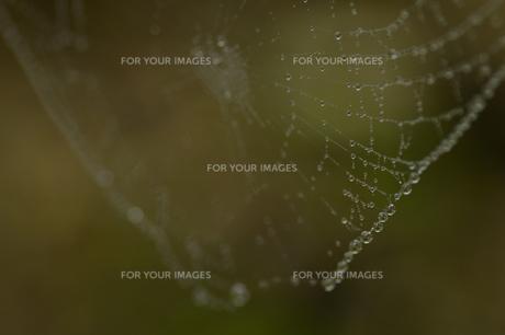 蜘蛛の巣に雫の写真素材 [FYI00148672]