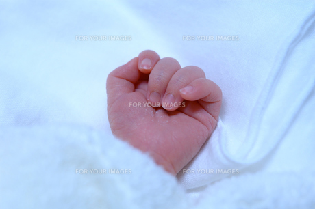 生まれたて赤ちゃんの手の写真素材 [FYI00148743]
