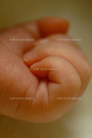 生まれたて赤ちゃんの手の素材 [FYI00148744]