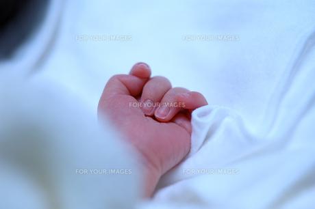 生まれたて赤ちゃんの手の写真素材 [FYI00148750]