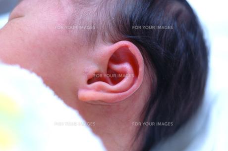 赤ちゃんの耳の素材 [FYI00148752]