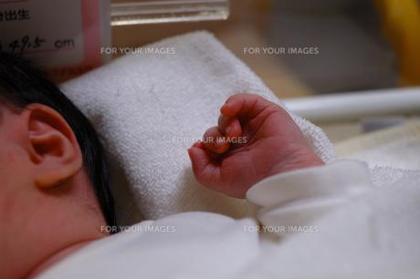 生まれたて赤ちゃんの手の素材 [FYI00148753]