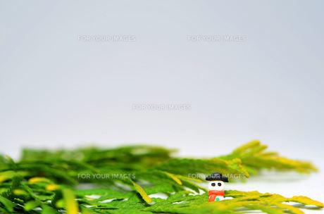 雪だるまの写真素材 [FYI00148987]