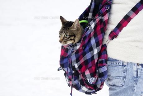 猫の写真素材 [FYI00149250]