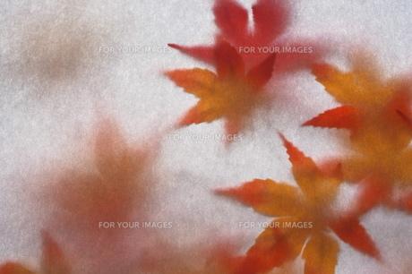 紅葉の写真素材 [FYI00149359]