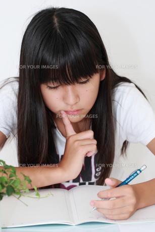 勉強する女の子の写真素材 [FYI00149421]