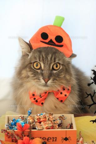 ハロウィン猫の素材 [FYI00149531]
