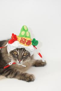お正月コスプレの猫の素材 [FYI00149573]
