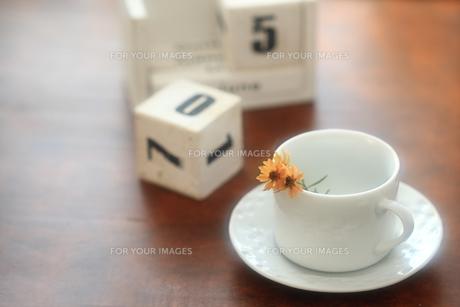 カレンダーとカップに挿したコレオプシスの素材 [FYI00149599]