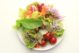 野菜サラダの素材 [FYI00149609]