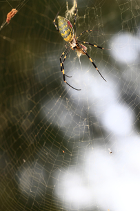捕食する蜘蛛の素材 [FYI00149617]