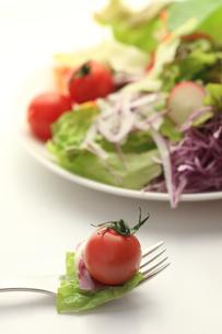 野菜サラダの素材 [FYI00149620]