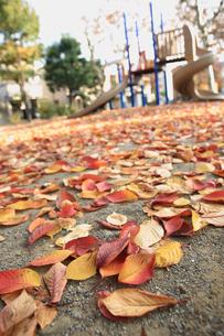秋の公園の素材 [FYI00149636]