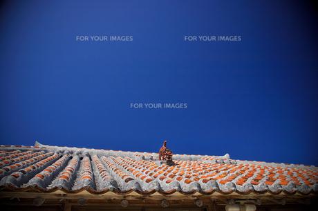 竹富島 シーサーの屋根の写真素材 [FYI00149795]
