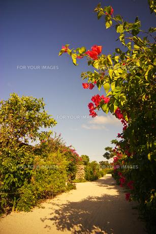 竹富島 白砂の道とブーゲンビリアの写真素材 [FYI00149802]