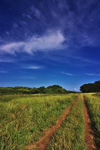 鳩間島 草原の道の写真素材 [FYI00149860]