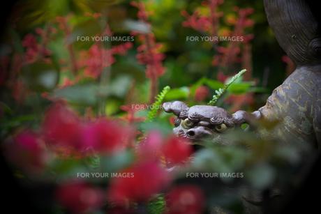 シーサーと花の写真素材 [FYI00149872]