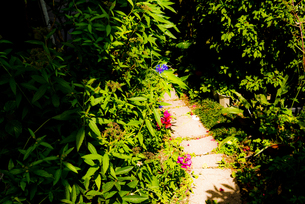 庭の小道の写真素材 [FYI00149955]