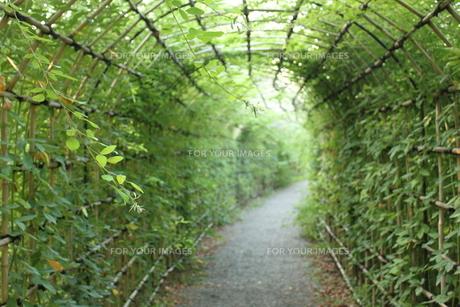萩のトンネルの写真素材 [FYI00150036]