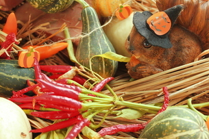 リスと野菜の写真素材 [FYI00150065]