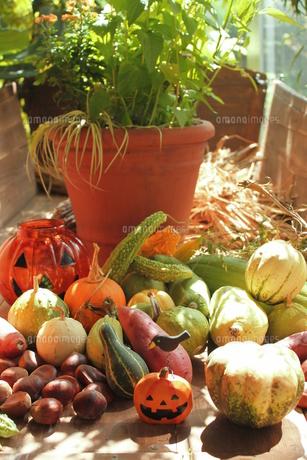 秋の収穫祭の写真素材 [FYI00150086]