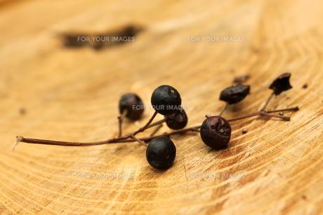木の実の素材 [FYI00150103]